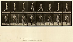 Animal locomotion. Plate 5 (Boston Public Library).jpg