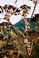 Animals-Sicily-bjs-3.jpg