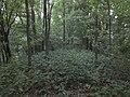 Ant Barkūnų ozo - panoramio.jpg