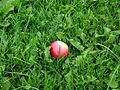 Apple in green grass.jpg