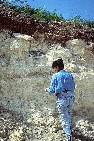 Solum - Arawak soil series. St. Croix, U.S. Virgin Islands. Solum depth is 11 inches and soil depth is 14 inches