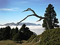 Arbre mort en Chartreuse - panoramio.jpg