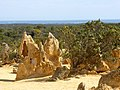 At the Pinnacles in Nambung National Park (15199592905).jpg