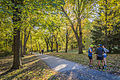 Au bonheur de l'automne au parc Mont-Royal (15528521005).jpg