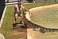 Australia Zoo Steve Irwin feeding Crocodile (6081362690).jpg