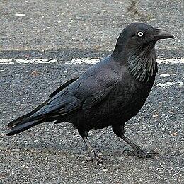 Bird vocalization - Wikipedia