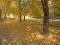 Autumn at Bratislava.jpg