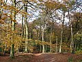 Autumn at Lambridge Wood - geograph.org.uk - 1588796.jpg