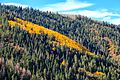 Autumn colours in SW Utah - Hwy 31, along Cottonwood Creek, Utah (15467807068).jpg