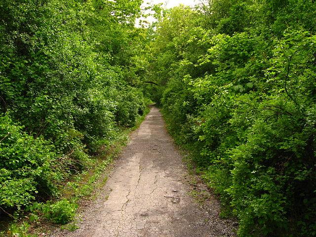 Dirt path through thick vegetation