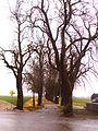 Bad Wimsbach - Schlossallee.jpg