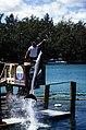 Bahamas 1988 (286) Paradise Island Paradise Lake (24044482732).jpg