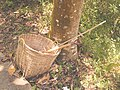 Bamboo cleaning on the outdoor.jpg
