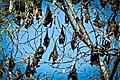 Bat tree (5581482642).jpg