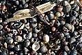 Beach closeups (33410892691).jpg