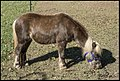 Ben feeding Little Bill-1 (28132505971).jpg