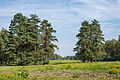 Bergen-Belsen concentration camp memorial - the former camp's main street - 07.jpg