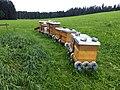 Berggasthof Haldenhof - Bienenstöcke (3).jpg