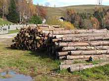 Tronchi di alberi provenienti dai boschi delle alture di Biella, in Piemonte