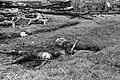 Bij hun aankomst in Brastagi deden onze troepen een lugubere vondst. In een massagraf werden 18 gemutileerde lijken aangetroffen. Elders in het dorp werden nog 40 vreselijke verminkte lijken gevonden van andere slachtoffers van de TNI.jpg