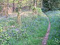 Bilberryhill Copse - geograph.org.uk - 168447.jpg