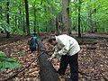 Bioblitzing in the rain - Flickr - treegrow.jpg