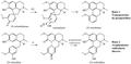 Biosíntesis de aporfinas.png