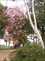 Birch and Flowers, Prospect Park 4-7-13 (8632584706).jpg