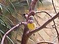 Birdie (117527726).jpg