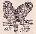 Bixler Owls.jpg