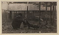 Black foxes owned by Spring Park Black Fox Company, Limited Photo A (HS85-10-26274).jpg