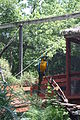 Blue-and-Gold Macaw at Elmwood Park Zoo.JPG