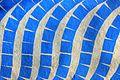 Blue (3029328855).jpg
