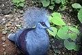 Blue wild Bird.jpg