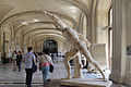 Borghese Gladiator, Louvre Museum, Paris 15 June 2014.jpg