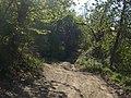 Bosco presso la Cannella - panoramio.jpg