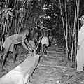 Boslandcreolen vervoeren een boomstam over een pad in het oerwoud, Bestanddeelnr 252-4849.jpg