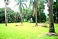 Botanic garden limbe146.jpg