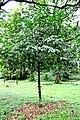 Botanic garden limbe75.jpg