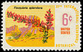 Botanical Congress Ocotillo 6c 1969 issue U.S. stamp.jpg
