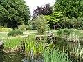 Botanischer Garten Freiburg - DSC06406.jpg