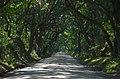 Botony Bay Road ^1 - panoramio.jpg