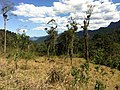 Brasil Rural - panoramio (30).jpg