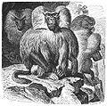 Brehms Het Leven der Dieren Zoogdieren Orde 1 Mantel-Baviaan (Cynocephalus hamadryas).jpg