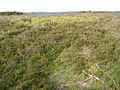Bronze age and 20th century relics on Ibsley Common, New Forest - geograph.org.uk - 187121.jpg