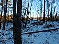 Bryansky District, Bryansk Oblast, Russia - panoramio (36).jpg