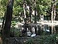 Bucuresti, Romania, Parcul Cismigiu; B-II-a-A-19655 (Lacul Lebedelor 8).JPG