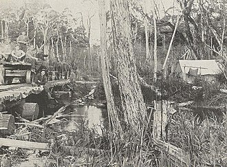 Marrawah Tramway - Bridging the Welcome River, 1913