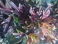 Bunga bunga jie73.jpg