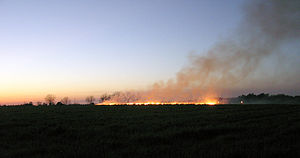 Air pollution - Controlled burning of a field outside of Statesboro, Georgia in preparation for spring planting.